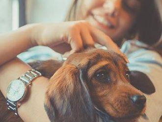 Pet Friendly Apartments - Lets With Pets - Essential Living