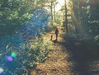 London's Best Parks for Dog-Walking