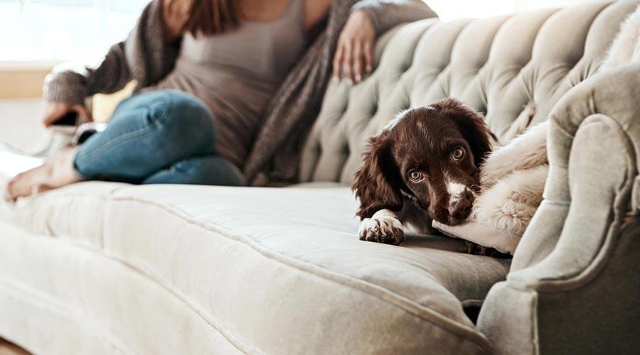 dog chewing a cushion in a pet friendly flat