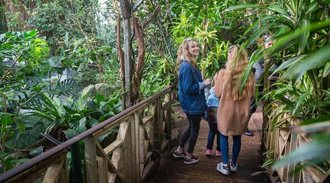 The Living Rainforest - Days Out in Berkshire