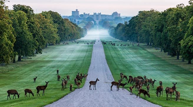 Windsor Great Park - Days Out in Berkshire