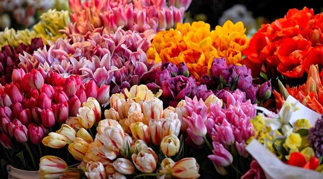 Columbia Road Flower Market - Living in Bethnal Green
