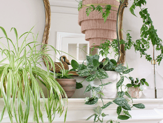 , 15 Indoor Plants Perfect for Apartment Dwellers