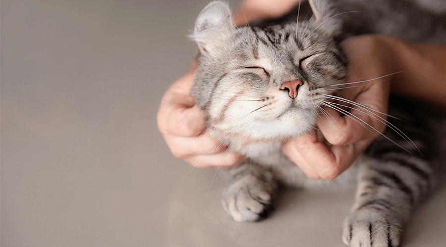 Cat being stroked in a flat