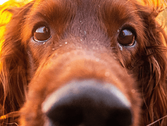 Where to Adopt a Dog in London - Essential Living