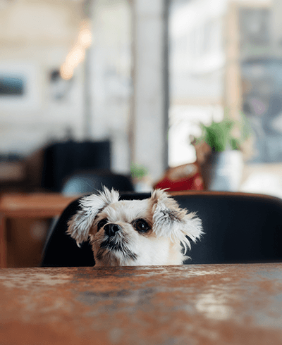 Dog Friendly Restaurants in East London