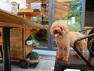Dog Friendly Restaurants in North London