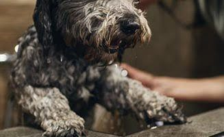 Dog Grooming in North London
